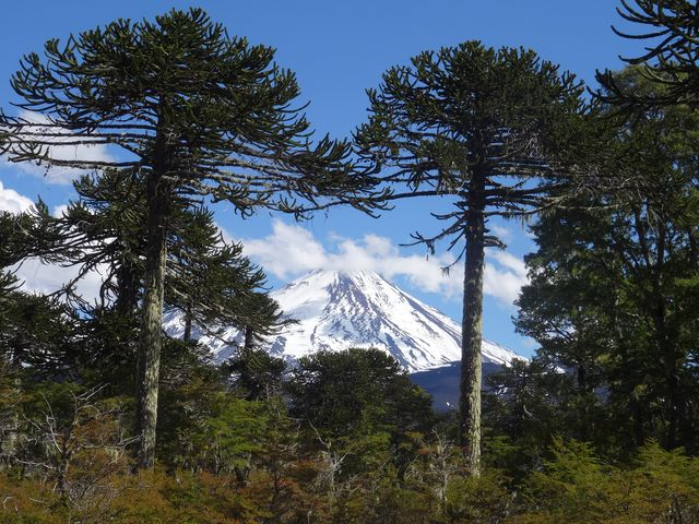 Conguillio National Park, near Temuco, lies in the middle of the ancestral territory claimed by the Mapuche. The Llaima Volcano, periodically still active is regarded as sacred